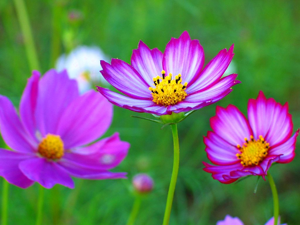 秋の花 11