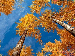 landscape_trees_in_autum-0362